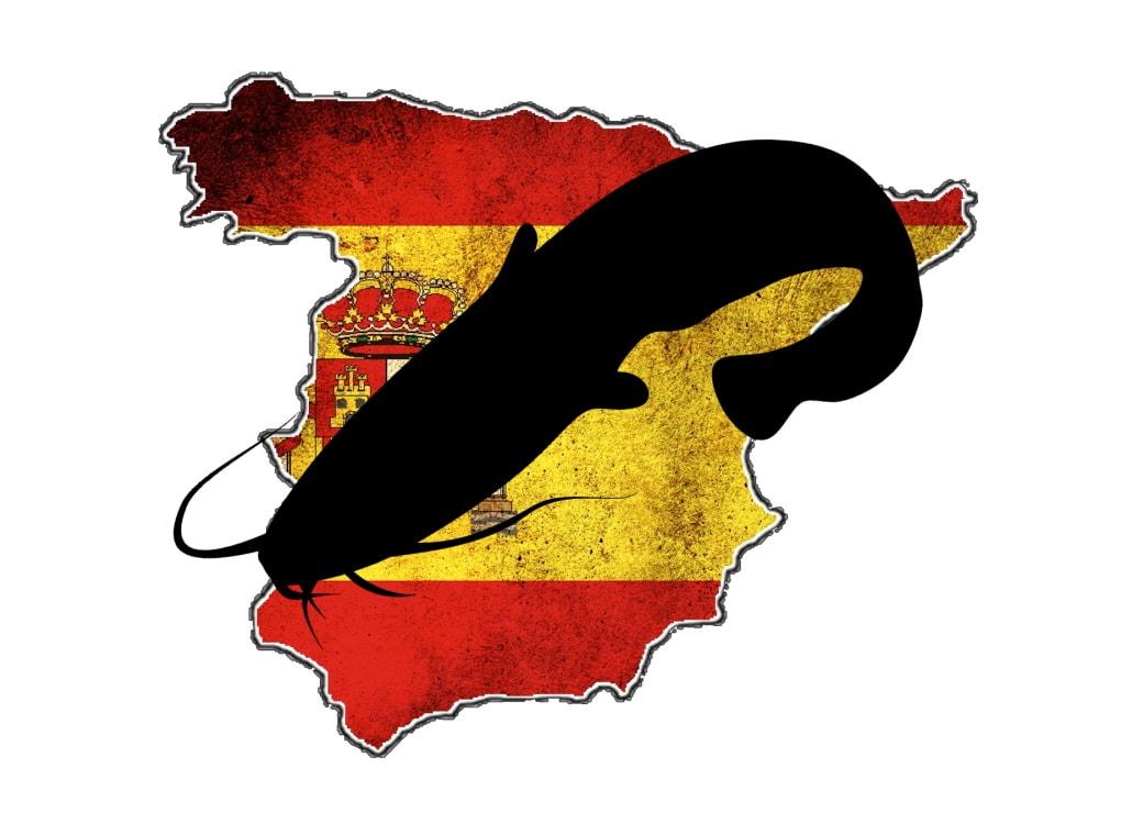 wallerangeln-spanien-wallercamp